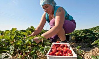 Ukraińcy mają coraz większe wymagania. Za grosze już nikt nie chce pracować